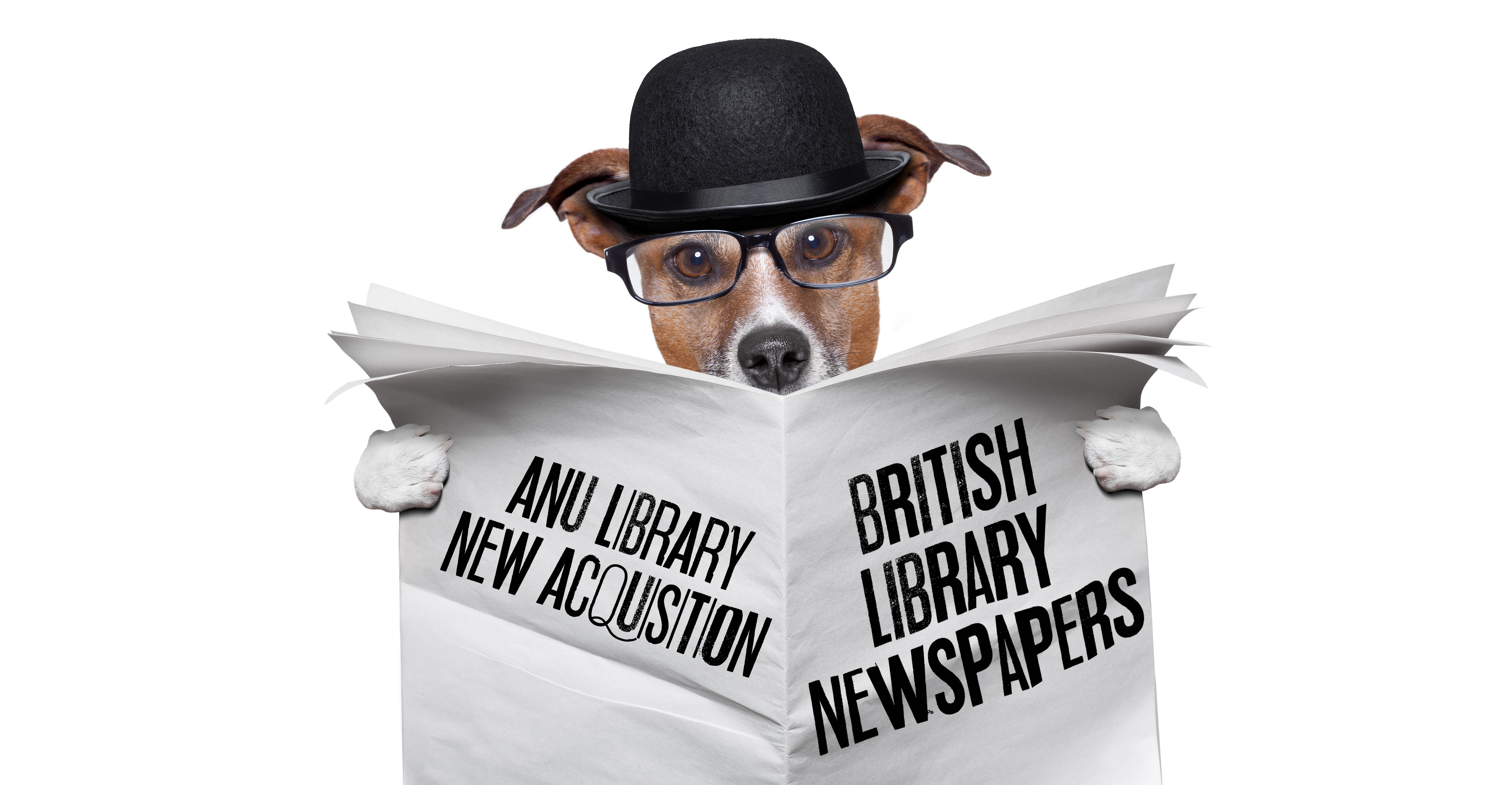 "Dog in bowler hat reading a newspaper that reads ""ANU Library new acquisition - British Library Newspapers"""