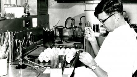 Frank Fenner inoculating chick-developing embryos with a virus suspension as part of his research into the genetic interaction between animal viruses