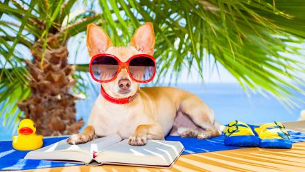 dog reading a book on the beach